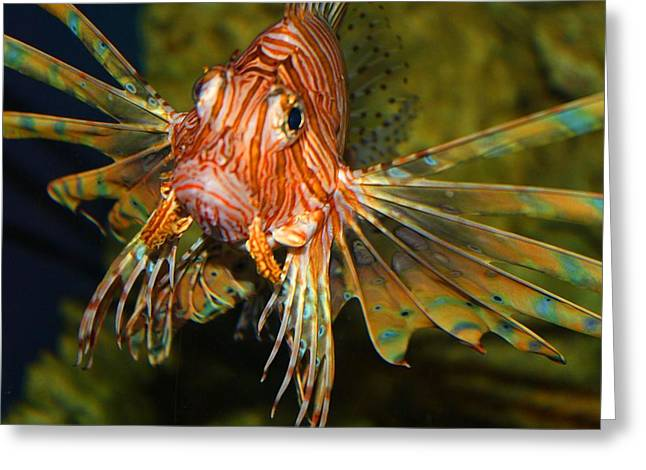 Lion Fish 2 Greeting Card by Kathryn Meyer