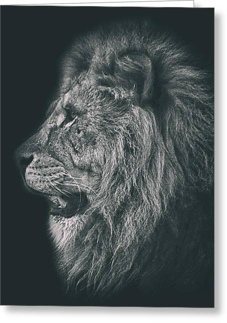 Lion Head Portrait Greeting Card