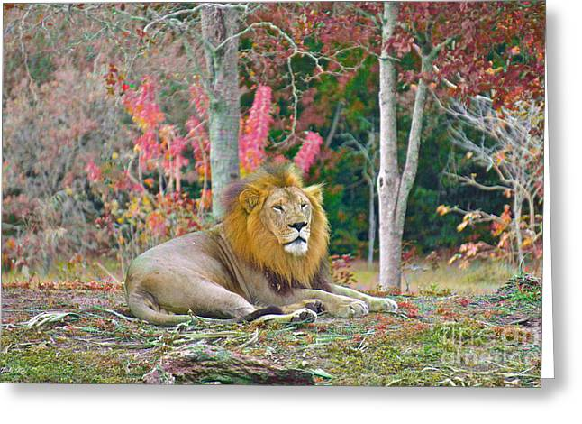 Lion In Color Edition 2 Greeting Card