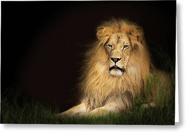 Lion In Grass With Copy Space Greeting Card by Susan Schmitz