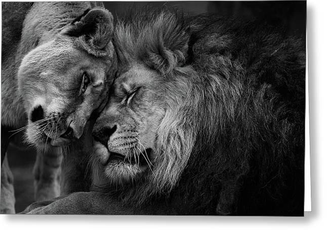 Lion In Love 2 Greeting Card