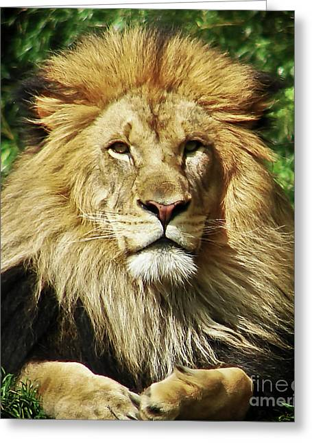 Lion King Greeting Card by Cathy Mounts
