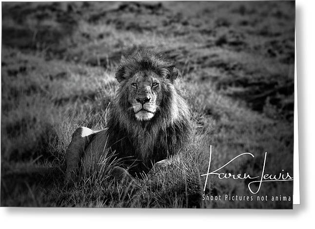 Greeting Card featuring the photograph Lion King by Karen Lewis