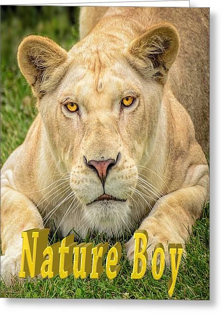 Lion Nature Boy Greeting Card by LeeAnn McLaneGoetz McLaneGoetzStudioLLCcom