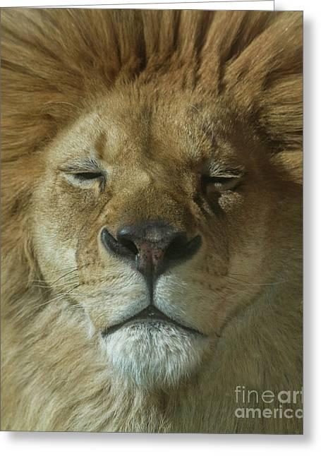 Lion Of Judah Greeting Card