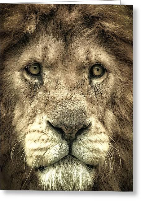 Lion Portrait Greeting Card by Chris Boulton