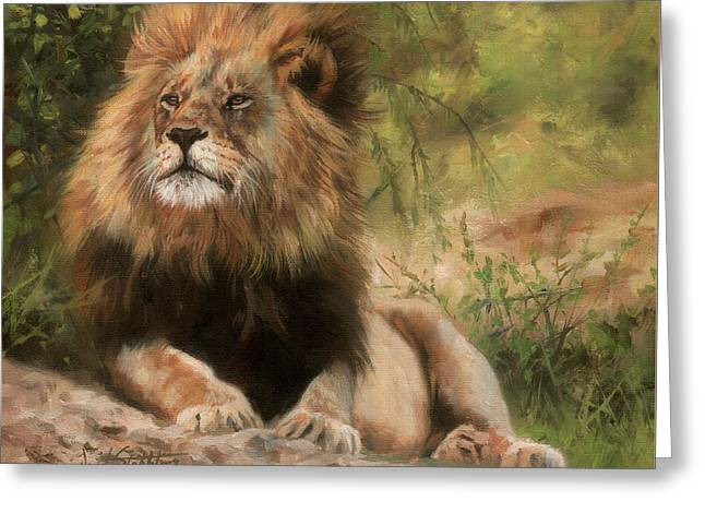 Lion Resting Greeting Card by David Stribbling