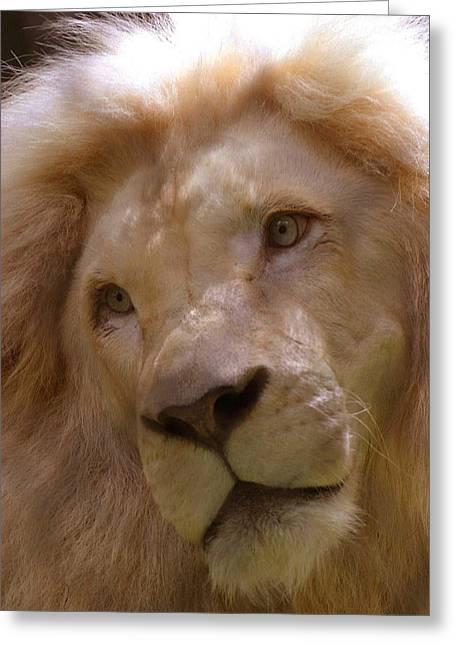 Lion Sad Eyes Greeting Card by Marlana Holsten