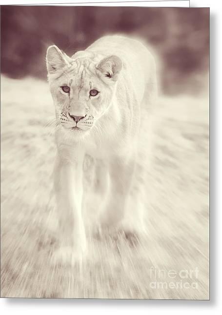 Lion Spirit Animal Greeting Card