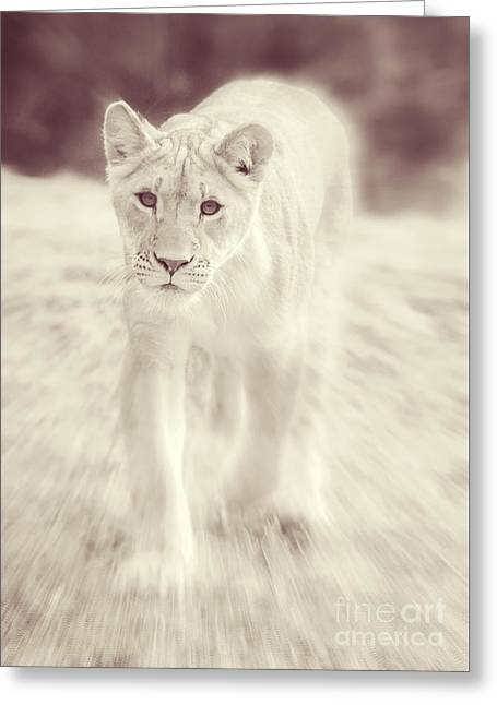 Lion Spirit Animal Greeting Card