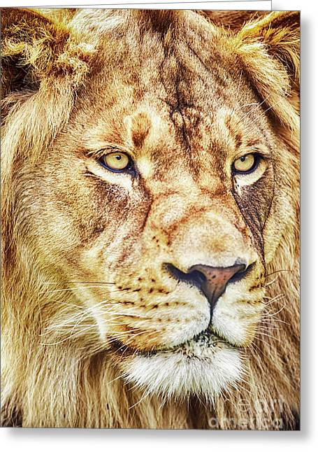 Greeting Card featuring the photograph Lion Is The King Of The Jungle by David Millenheft