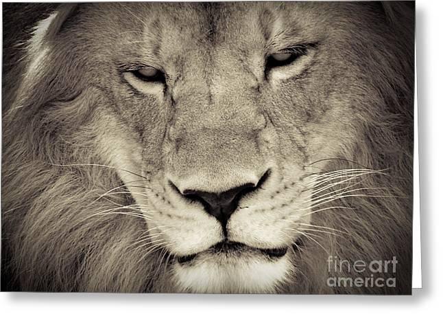Lion Greeting Card by Tonya Laker