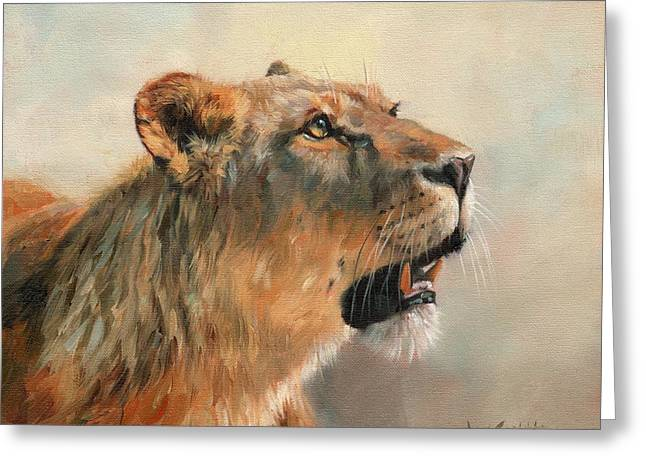 Lioness Portrait 2 Greeting Card by David Stribbling