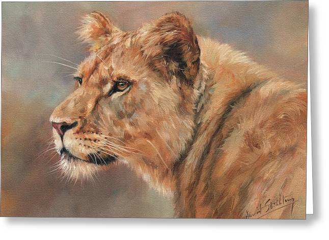 Lioness Portrait Greeting Card by David Stribbling