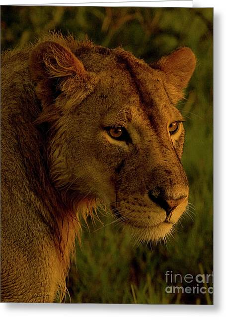 Lioness-signed-#6947 Greeting Card