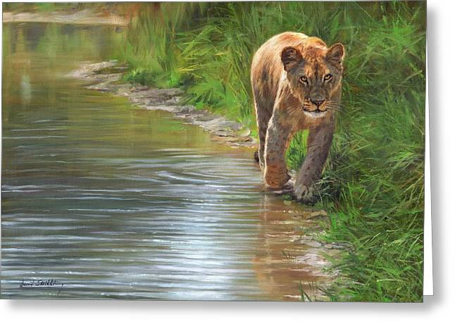 Lioness. Water's Edge Greeting Card by David Stribbling