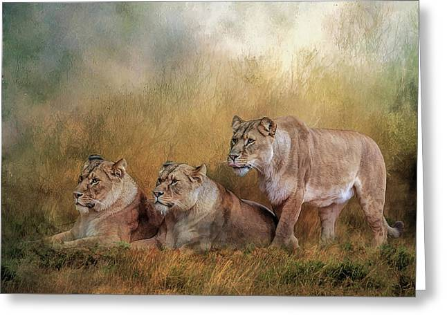 Lionesses Watching The Herd Greeting Card