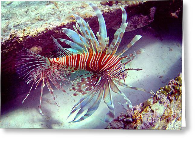 Lionfish Greeting Card by Adrian E Gray