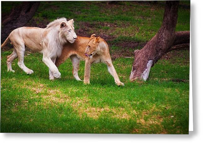 Lions Love Greeting Card by Jenny Rainbow