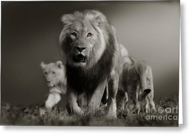 Greeting Card featuring the photograph Lions On Their Way by Christine Sponchia