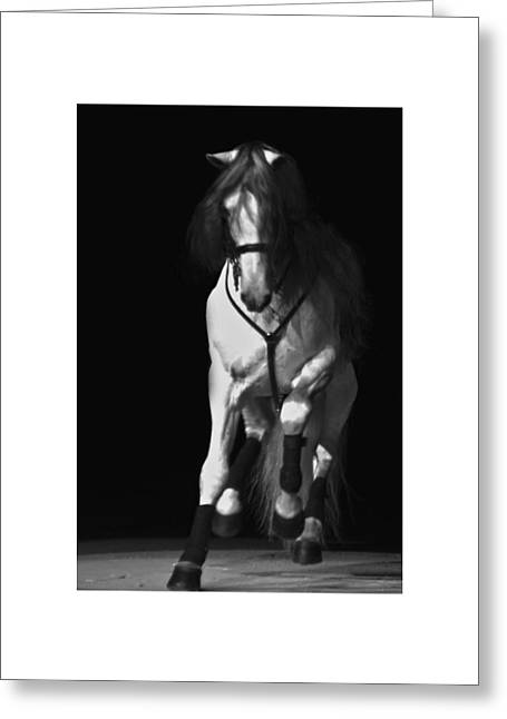 Greeting Card featuring the photograph Lipizzan 1 by Catherine Sobredo