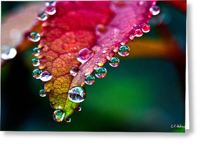 Liquid Beads Greeting Card by Christopher Holmes