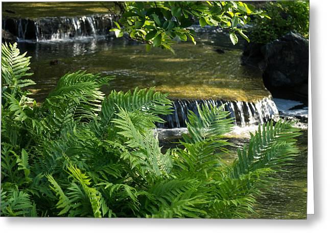 Listen To The Babbling Brook - Green Summer Zen Greeting Card