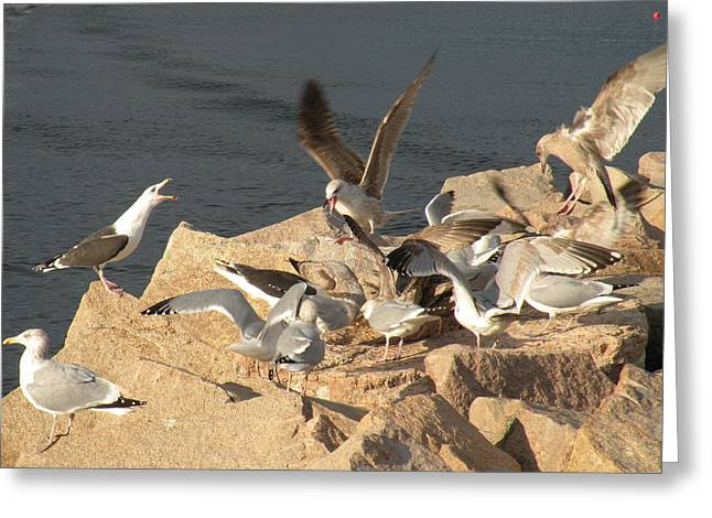 Listen Up Gulls Greeting Card by Donald Cameron