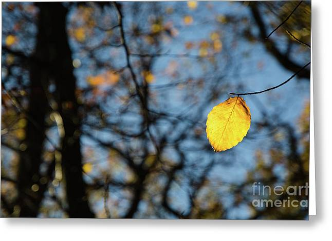 Greeting Card featuring the photograph Lit Lone Leaf by Kennerth and Birgitta Kullman