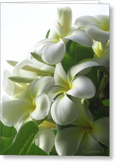 Lit Softly Greeting Card