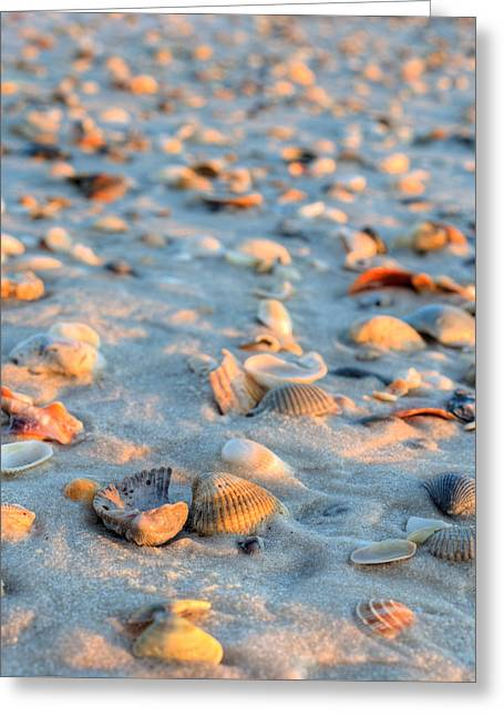 Litter On The Beach Greeting Card