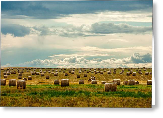 Littered With Bales Greeting Card