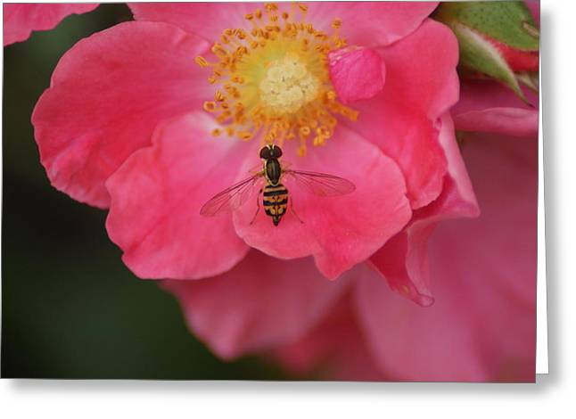 Little Bee Greeting Card by Heather Green