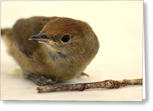 Little Bird 2 Greeting Card