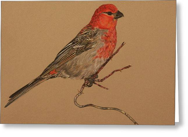 Little Bird Greeting Card by Michelle Miron-Rebbe
