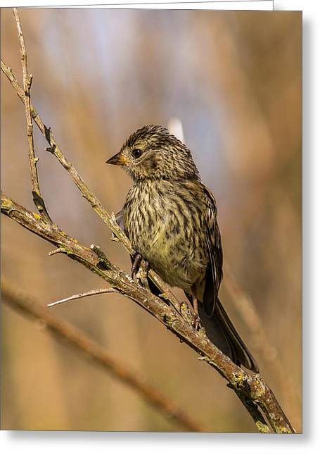 Little Bird On Little Branch Greeting Card