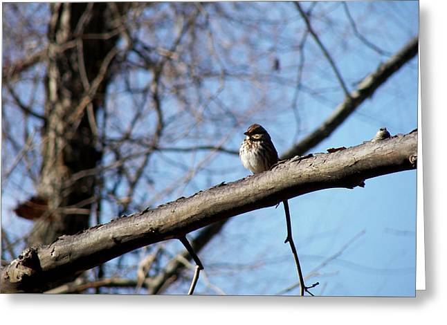 Little Birdie Greeting Card by JAMART Photography