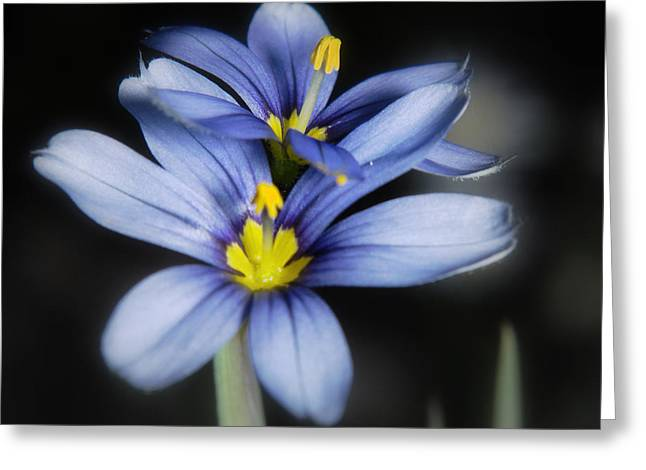 Greeting Card featuring the photograph Little Blue Flowers by Karen Musick