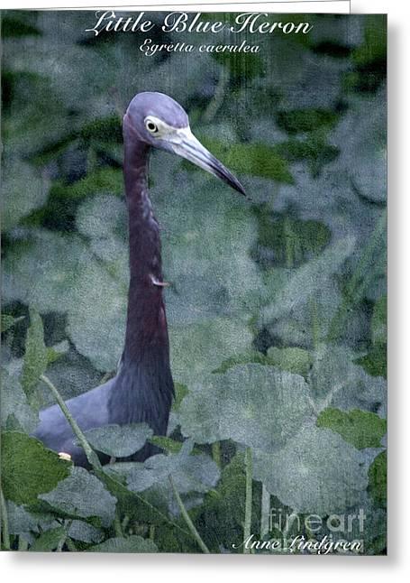 Little Blue Heron Greeting Card by Anne Lindgren
