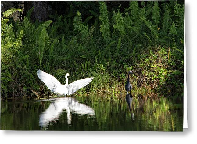 Little Blue Heron Non-impressed Greeting Card