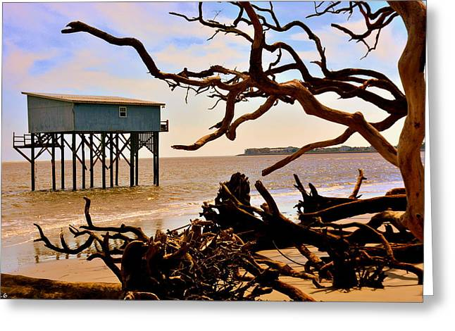 Little Blue Hunting Island State Park Beaufort Sc Greeting Card