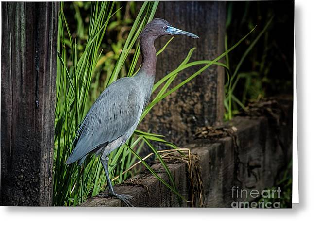 Little Blue Under Bridge Greeting Card by Robert Frederick