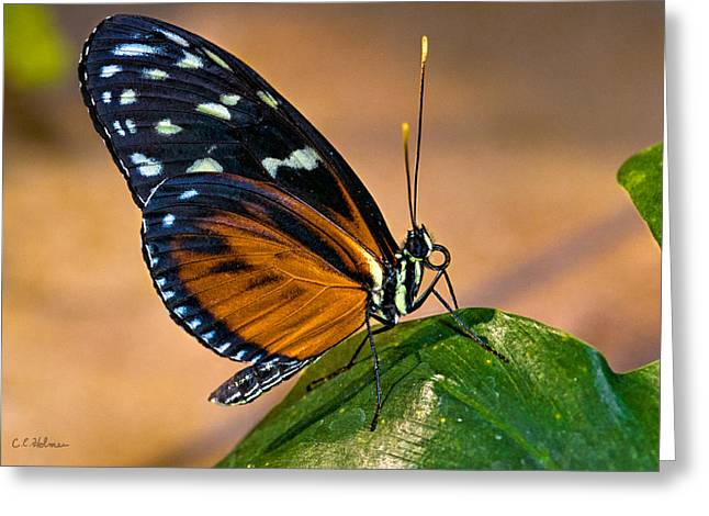 Little Butterfly Greeting Card by Christopher Holmes