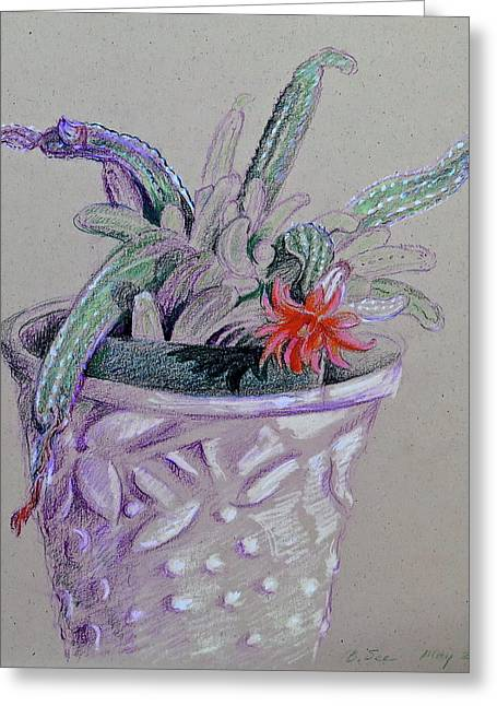 Little Cactus In Mccoy Pot Greeting Card