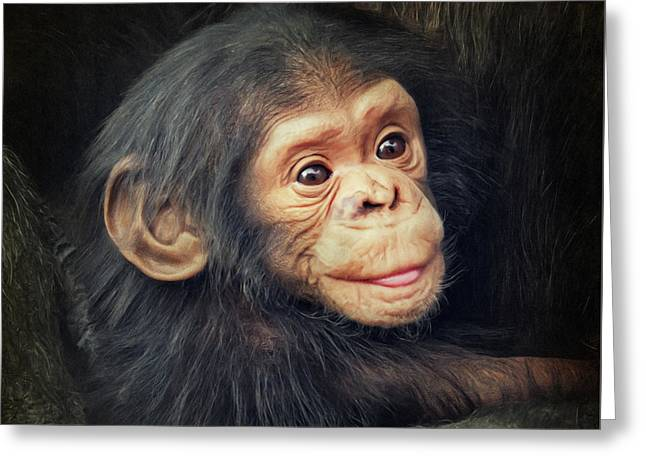 Little Chimpanzee Greeting Card by Angela Doelling AD DESIGN Photo and PhotoArt