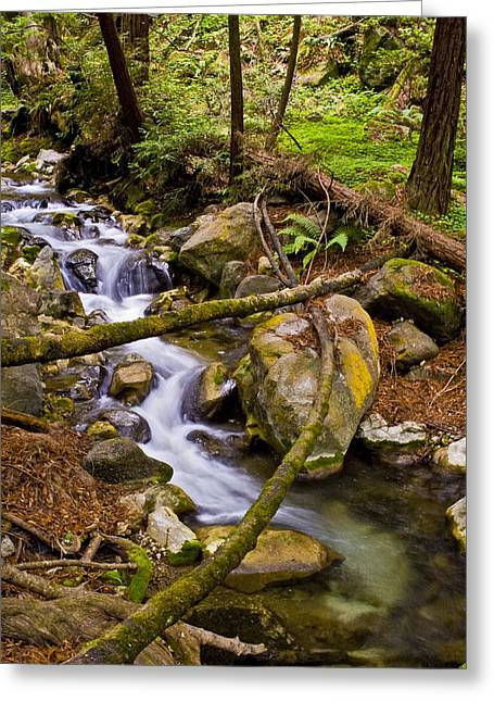 Greeting Card featuring the photograph Little Creek by Gary Brandes