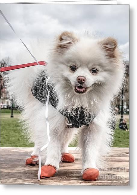 Little Doggie Greeting Card