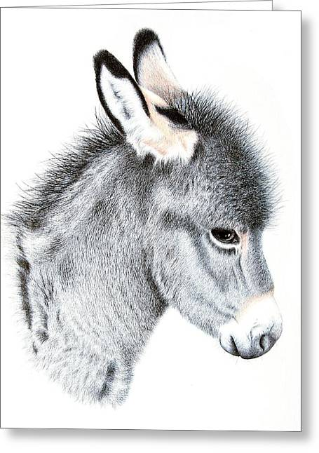 Little Donkey Greeting Card by Sandra Moore