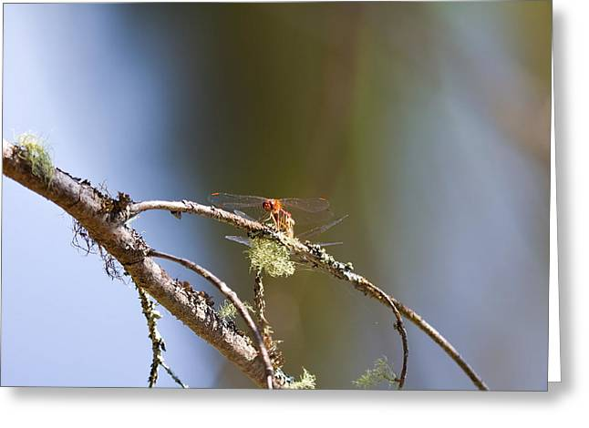 Little Dragonfly Greeting Card by Gary Smith