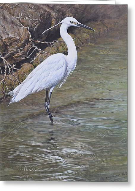 Greeting Card featuring the painting Little Egret by Alan M Hunt